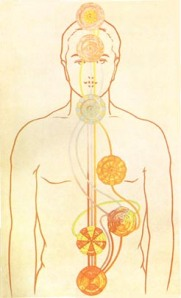 7 Major Chakras